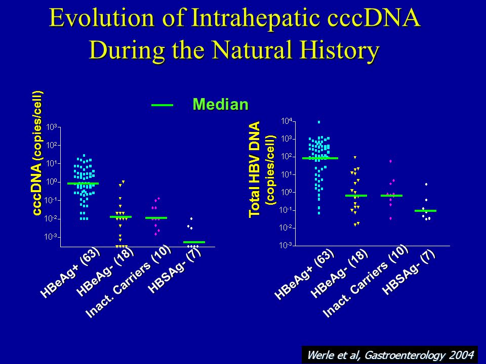 Evolution of Intrahepatic cccDNA During the Natural History