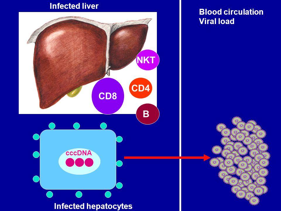 NKT CD4 CD8 B Infected liver Blood circulation Viral load