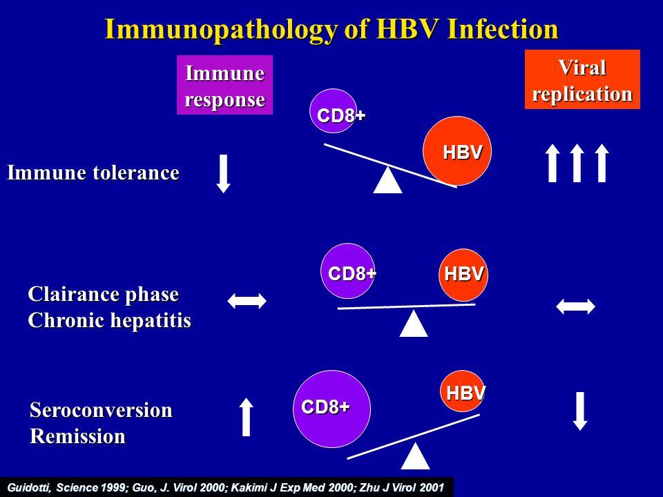 Immunopathology of HBV Infection
