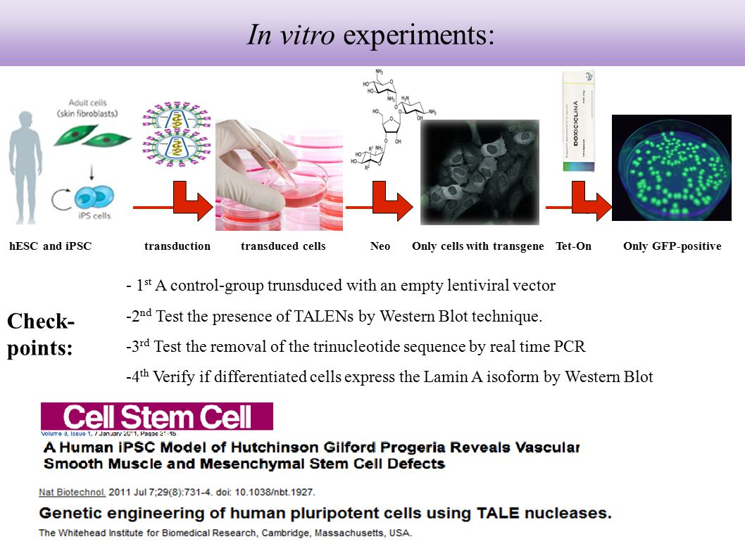 In vitro experiments: Check-points:
