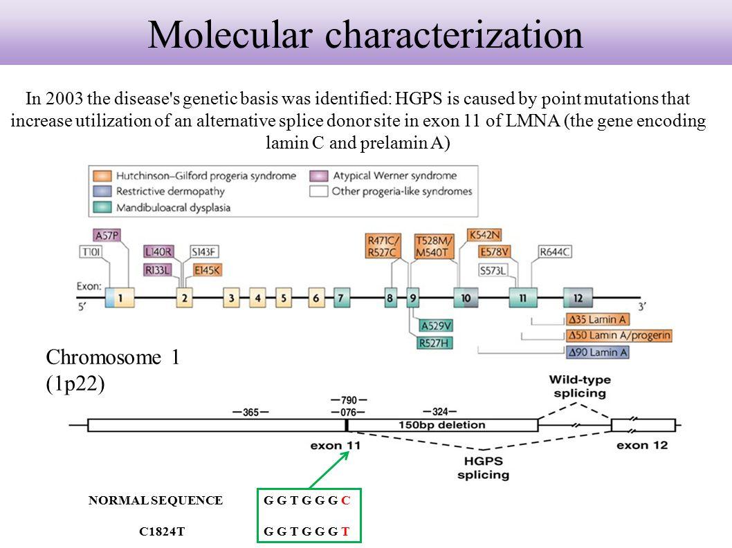 Molecular characterization