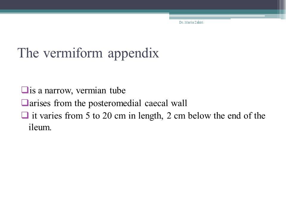 The vermiform appendix