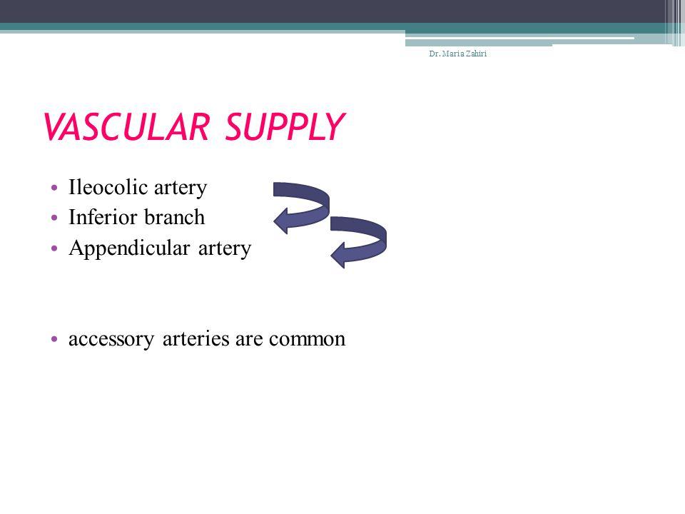 VASCULAR SUPPLY Ileocolic artery Inferior branch Appendicular artery