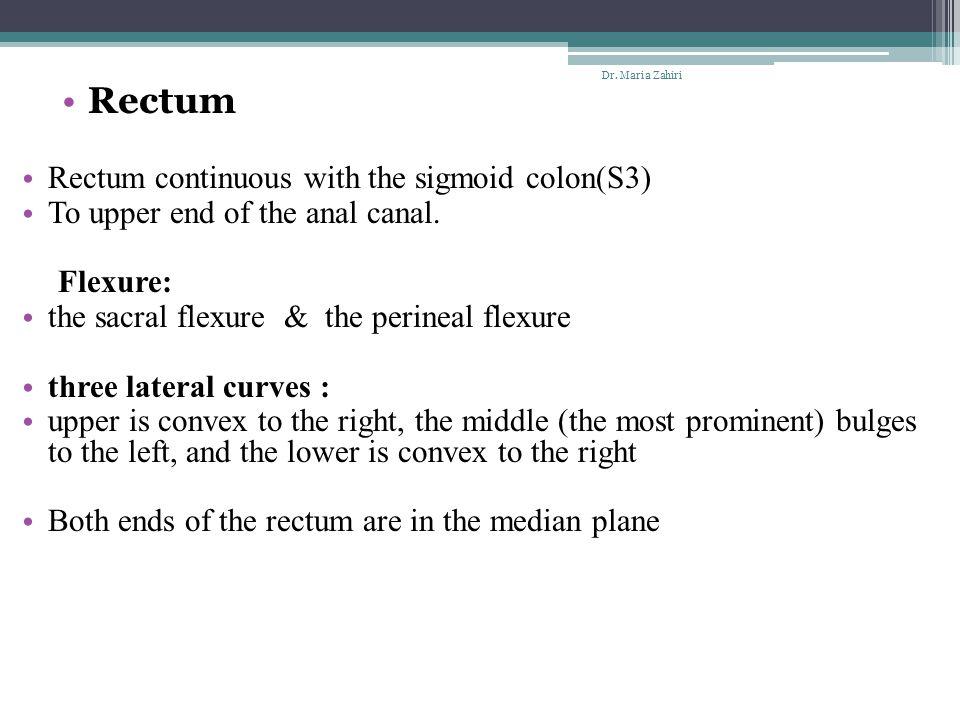 Rectum Rectum continuous with the sigmoid colon(S3)
