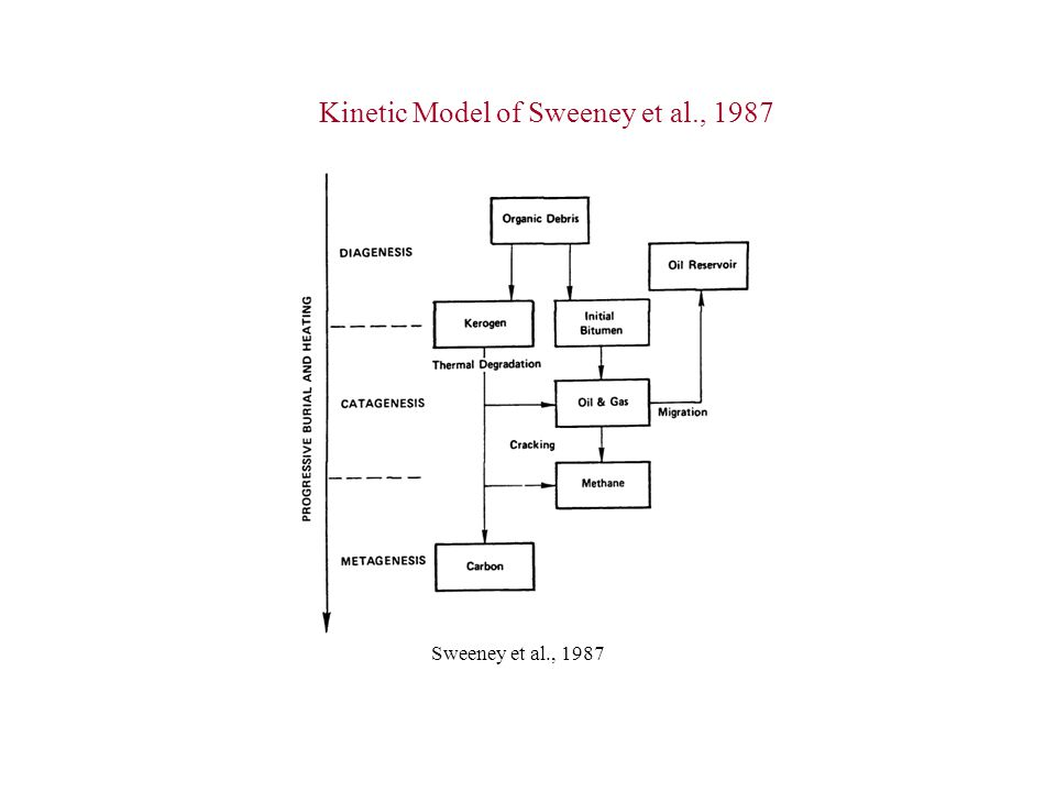 Kinetic Model of Sweeney et al., 1987