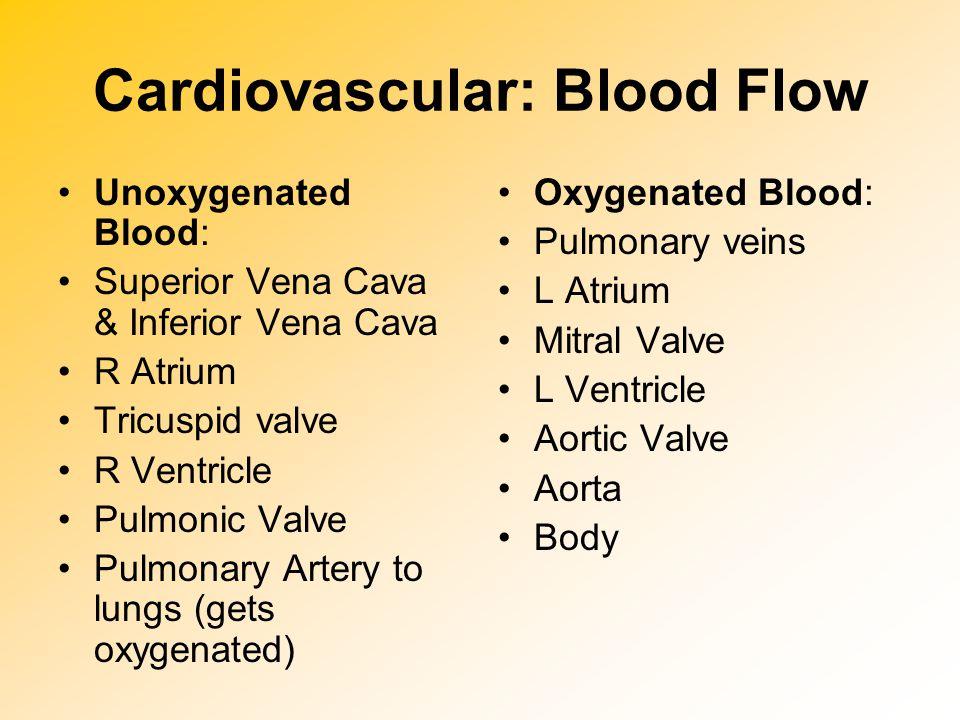 Cardiovascular: Blood Flow