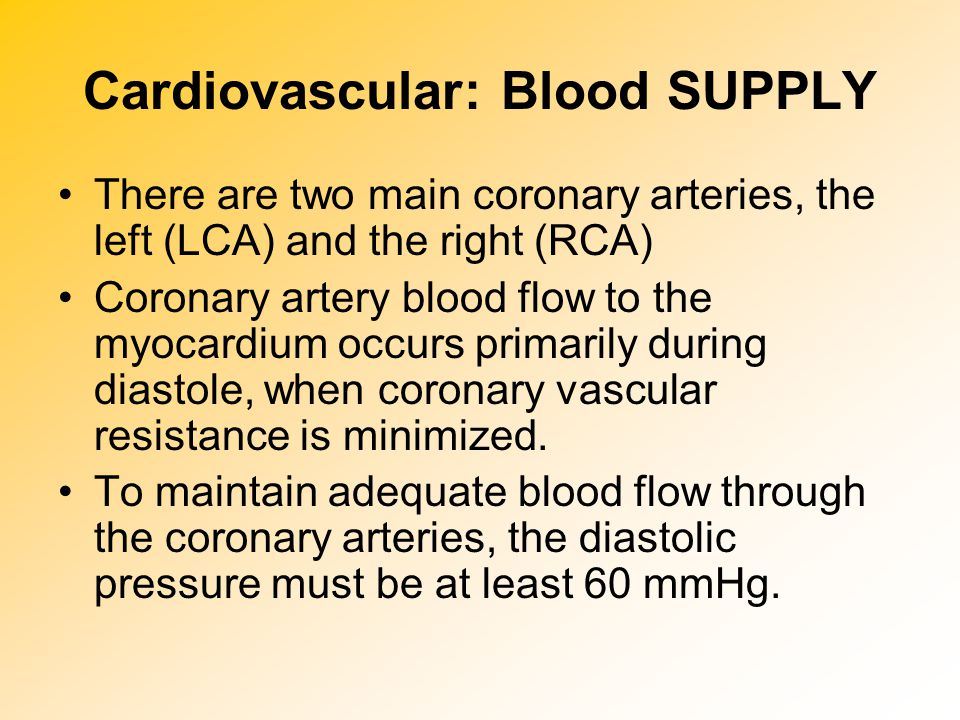 Cardiovascular: Blood SUPPLY