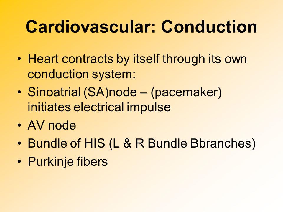Cardiovascular: Conduction