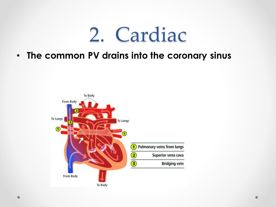 2. Cardiac The common PV drains into the coronary sinus