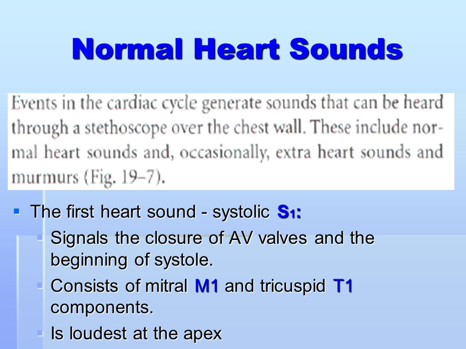 Normal Heart Sounds The first heart sound - systolic S1: