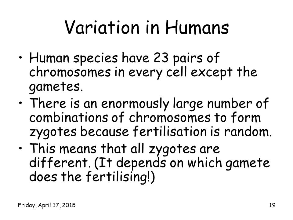 Variation in Humans Human species have 23 pairs of chromosomes in every cell except the gametes.