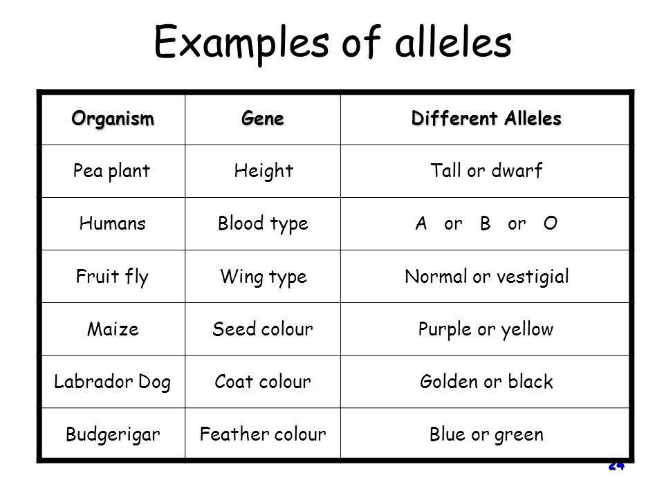 Examples of alleles Organism Gene Different Alleles Pea plant Height