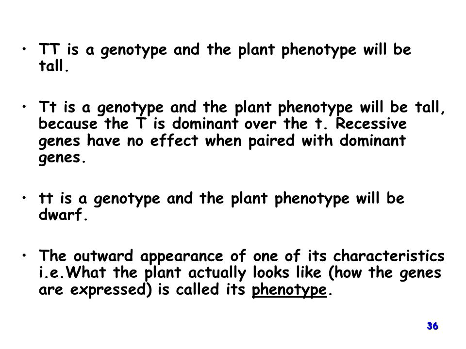 TT is a genotype and the plant phenotype will be tall.