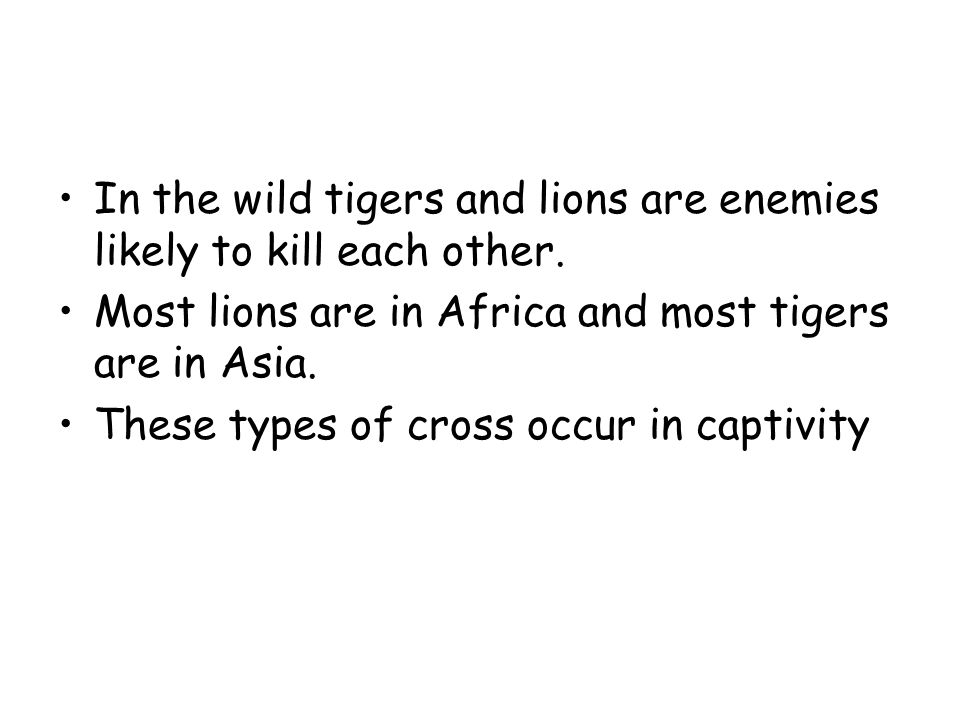 In the wild tigers and lions are enemies likely to kill each other.