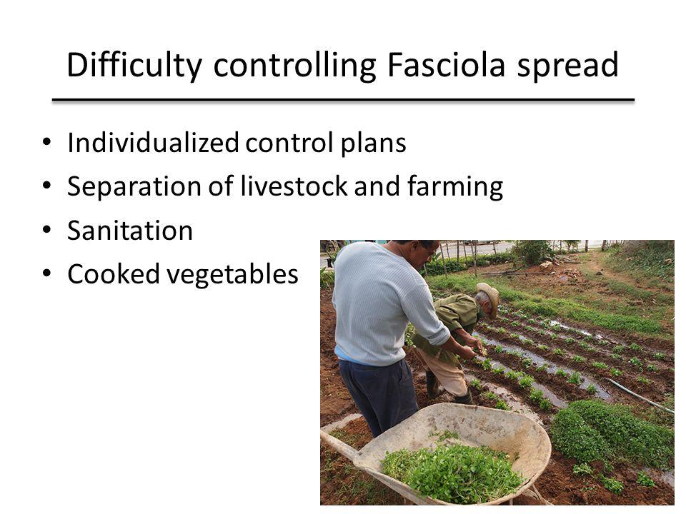Difficulty controlling Fasciola spread