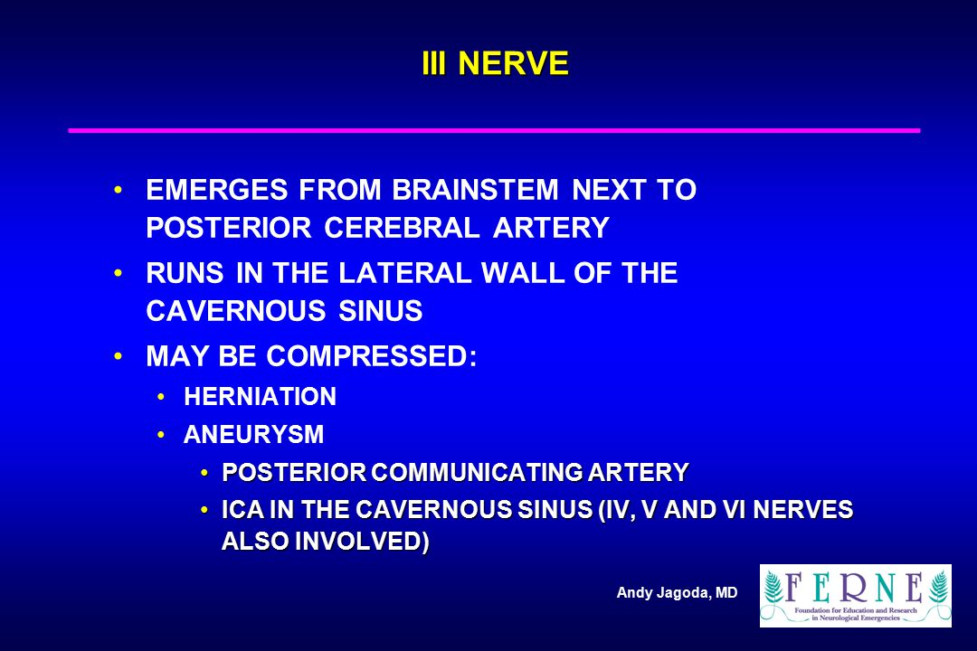 III NERVE EMERGES FROM BRAINSTEM NEXT TO POSTERIOR CEREBRAL ARTERY