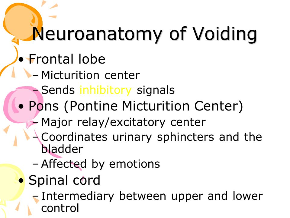 Neuroanatomy of Voiding