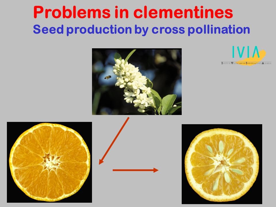 Problems in clementines