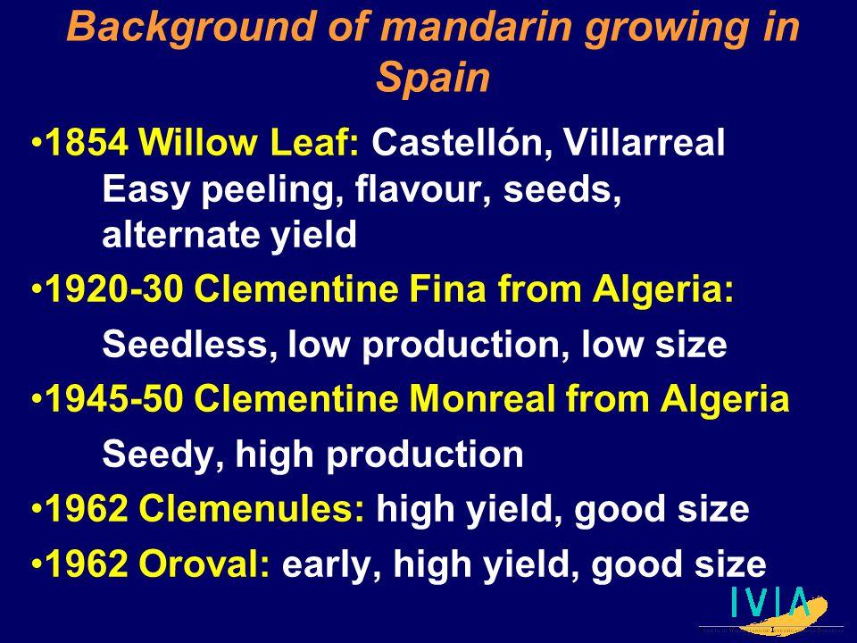Background of mandarin growing in Spain