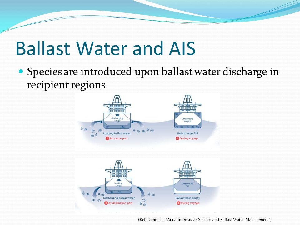 Ballast Water and AIS Species are introduced upon ballast water discharge in recipient regions.