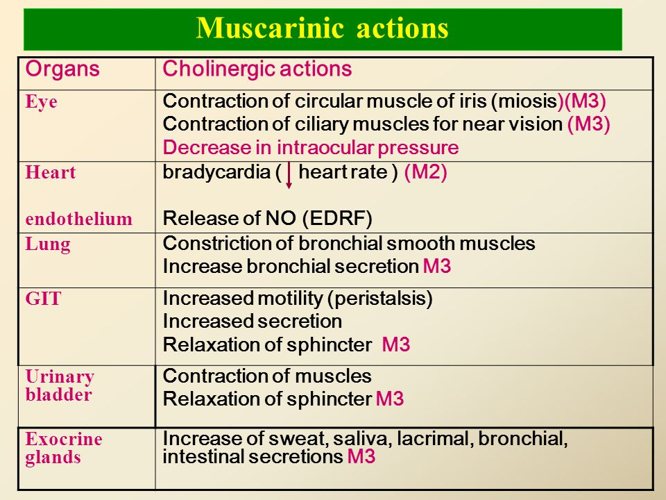 Muscarinic actions Cholinergic actions Organs