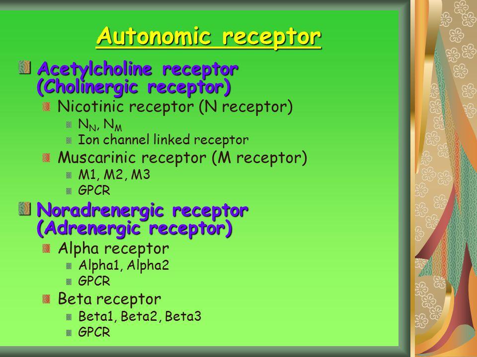 Autonomic receptor Acetylcholine receptor (Cholinergic receptor)