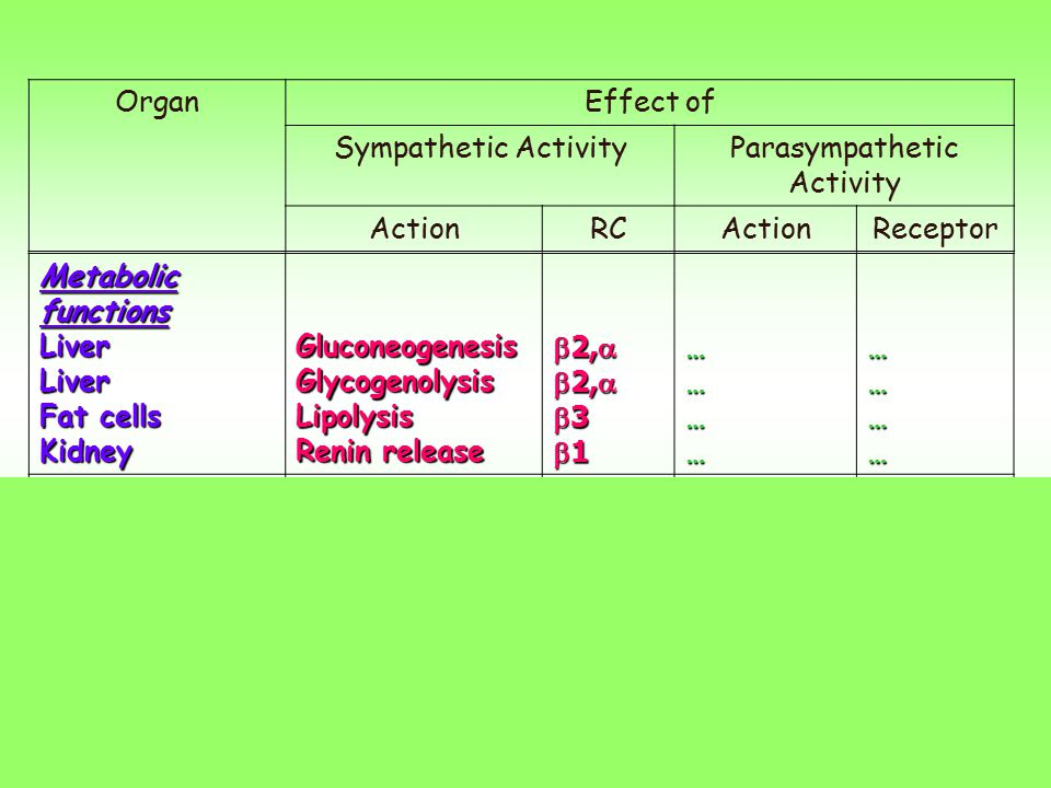 Parasympathetic Activity