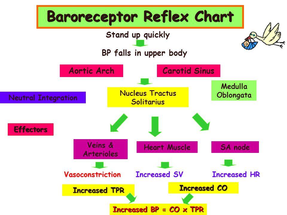 Baroreceptor Reflex Chart Nucleus Tractus Solitarius