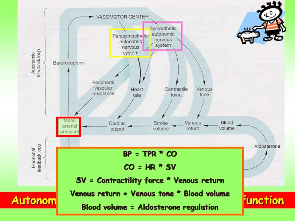 Autonomic and Hormonal Control of CVS function