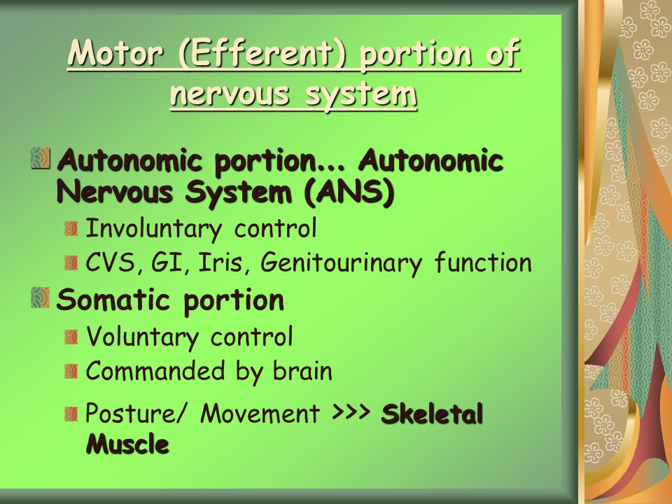 Motor (Efferent) portion of nervous system