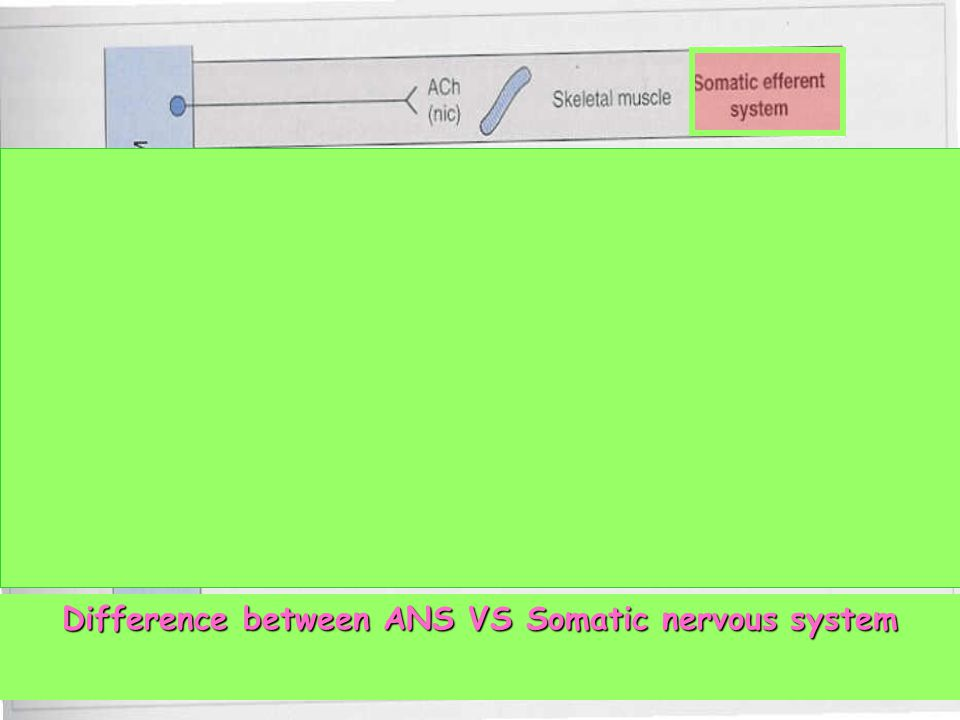 Difference between ANS VS Somatic nervous system
