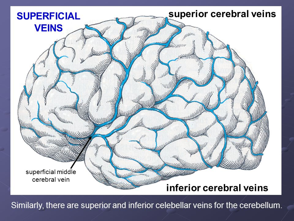 superficial middle cerebral vein