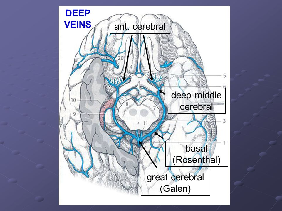 DEEP VEINS ant. cerebral deep middle cerebral basal (Rosenthal) great cerebral (Galen)
