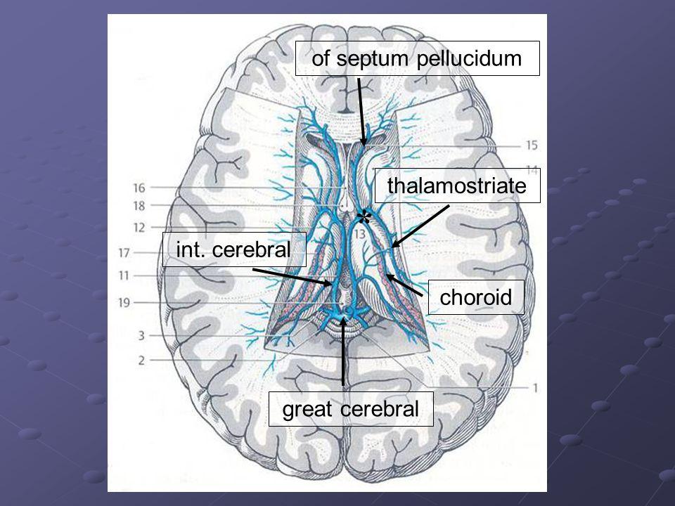 * of septum pellucidum thalamostriate int. cerebral choroid