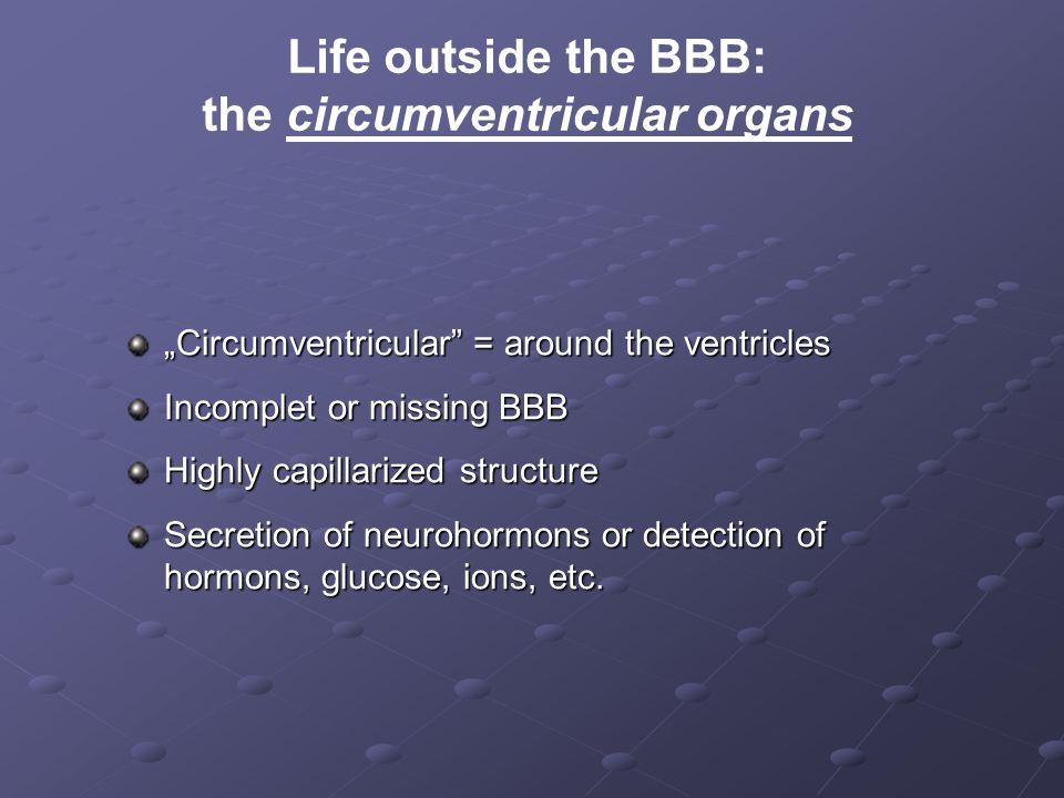the circumventricular organs