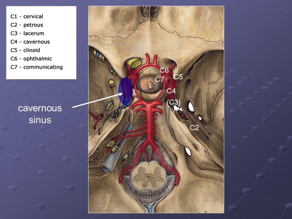 C6 C5 C7 C4 (C3) cavernous sinus C2