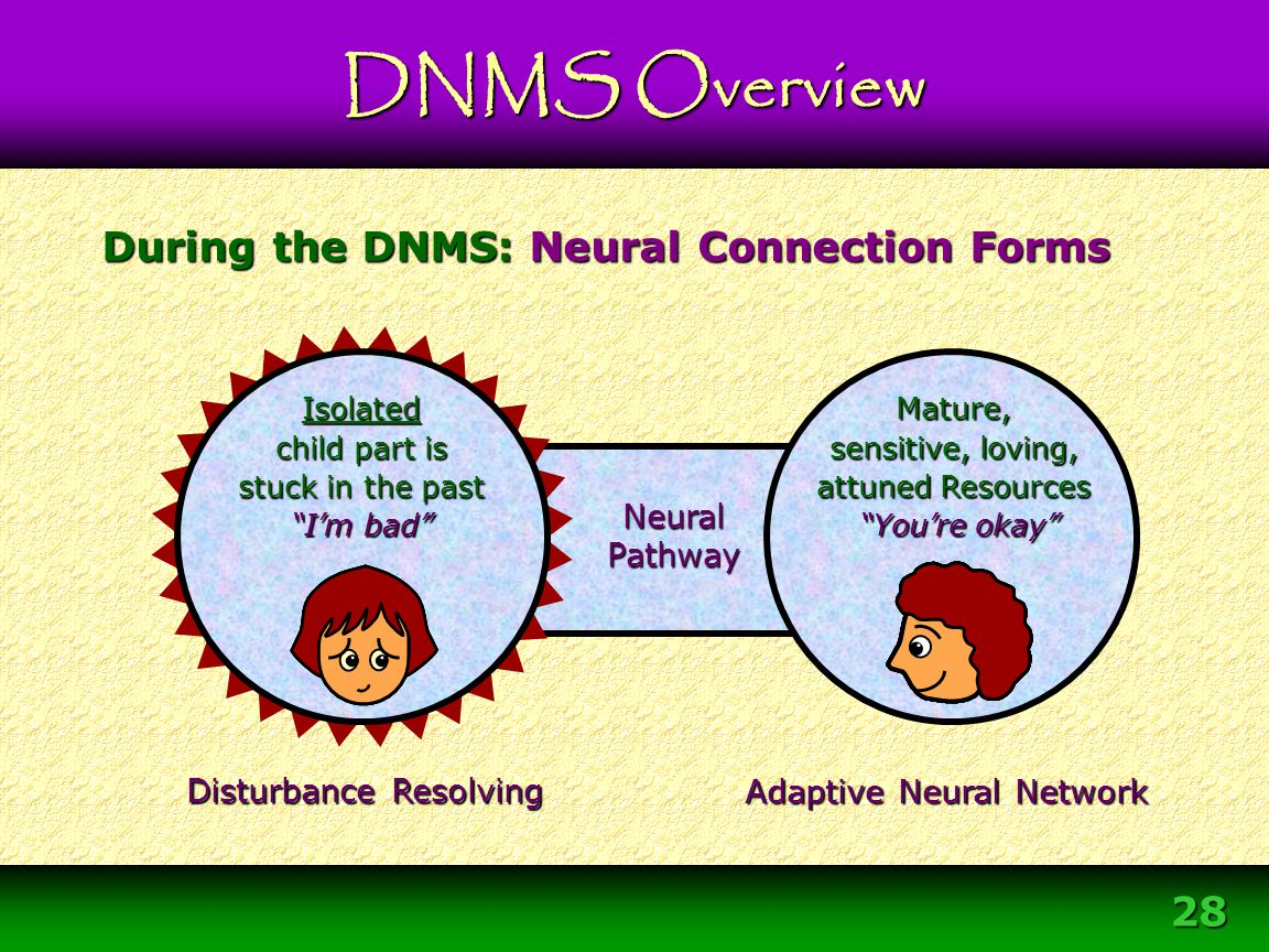During the DNMS: Neural Connection Forms