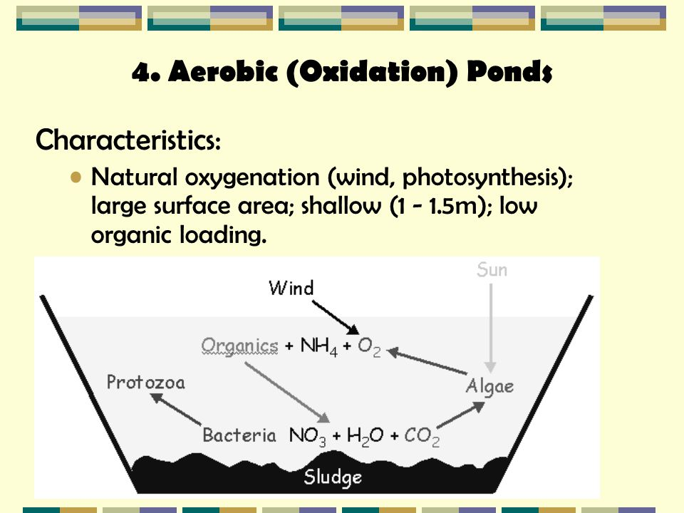 Biological treatment processes ppt video online download for Design of oxidation pond ppt