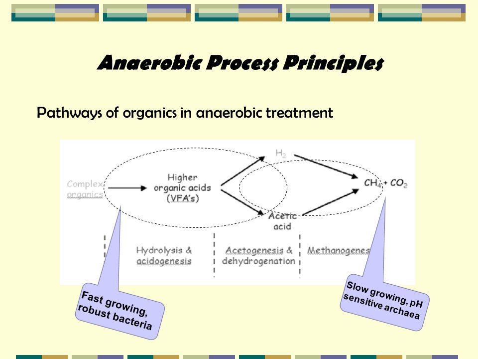 Anaerobic Process Principles