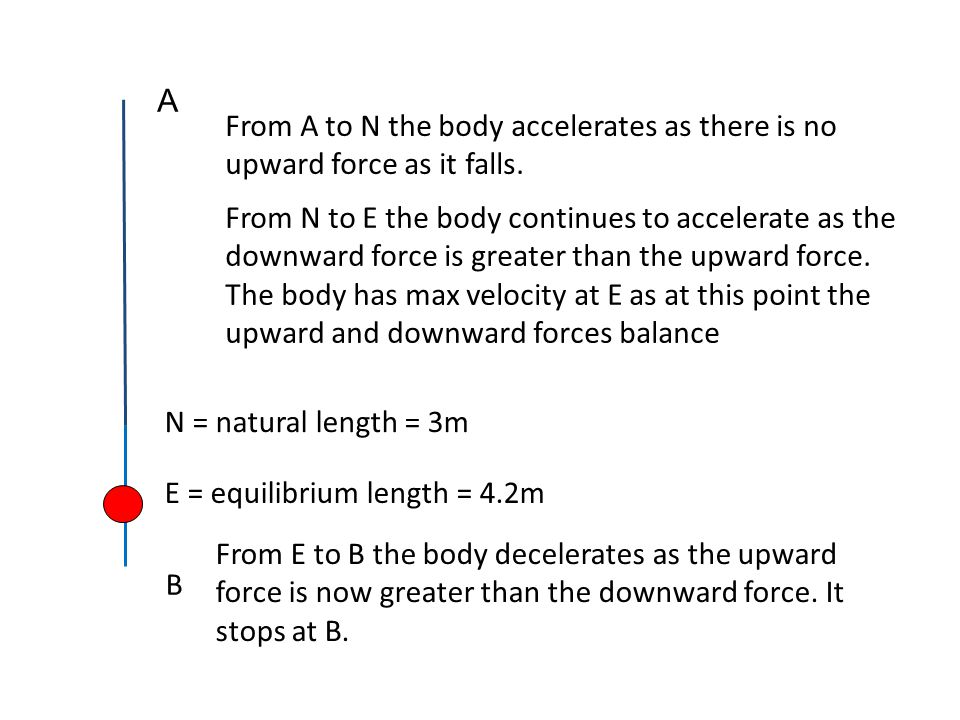 A From A to N the body accelerates as there is no upward force as it falls.