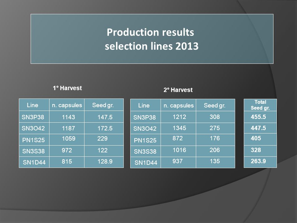 Production results selection lines 2013
