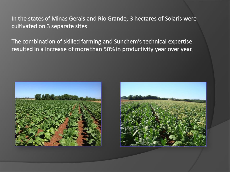 In the states of Minas Gerais and Rio Grande, 3 hectares of Solaris were cultivated on 3 separate sites