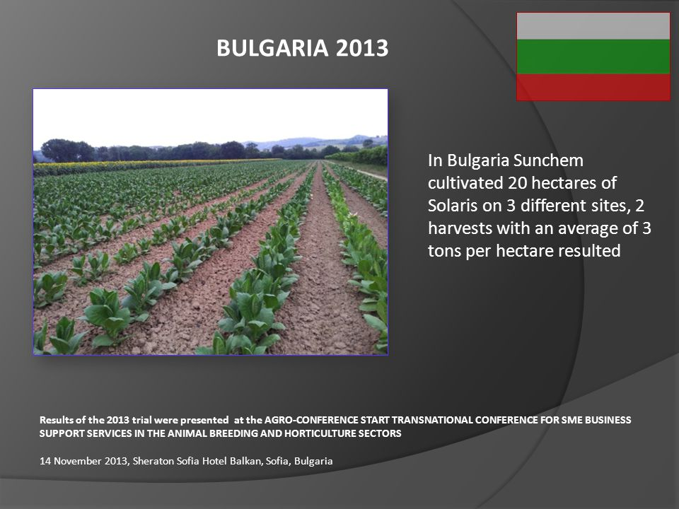BULGARIA 2013 In Bulgaria Sunchem cultivated 20 hectares of Solaris on 3 different sites, 2 harvests with an average of 3 tons per hectare resulted.