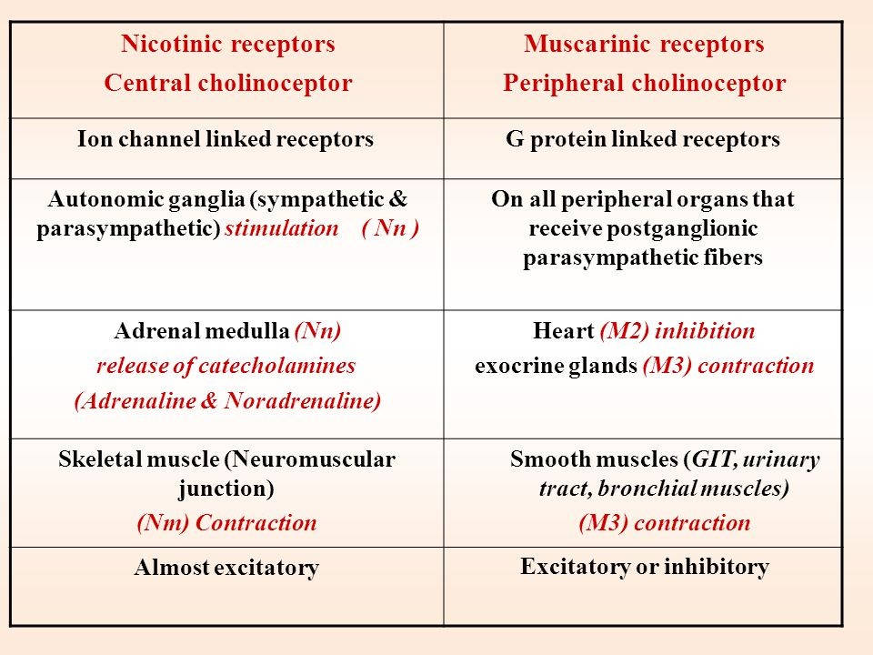 Peripheral cholinoceptor Nicotinic receptors Central cholinoceptor