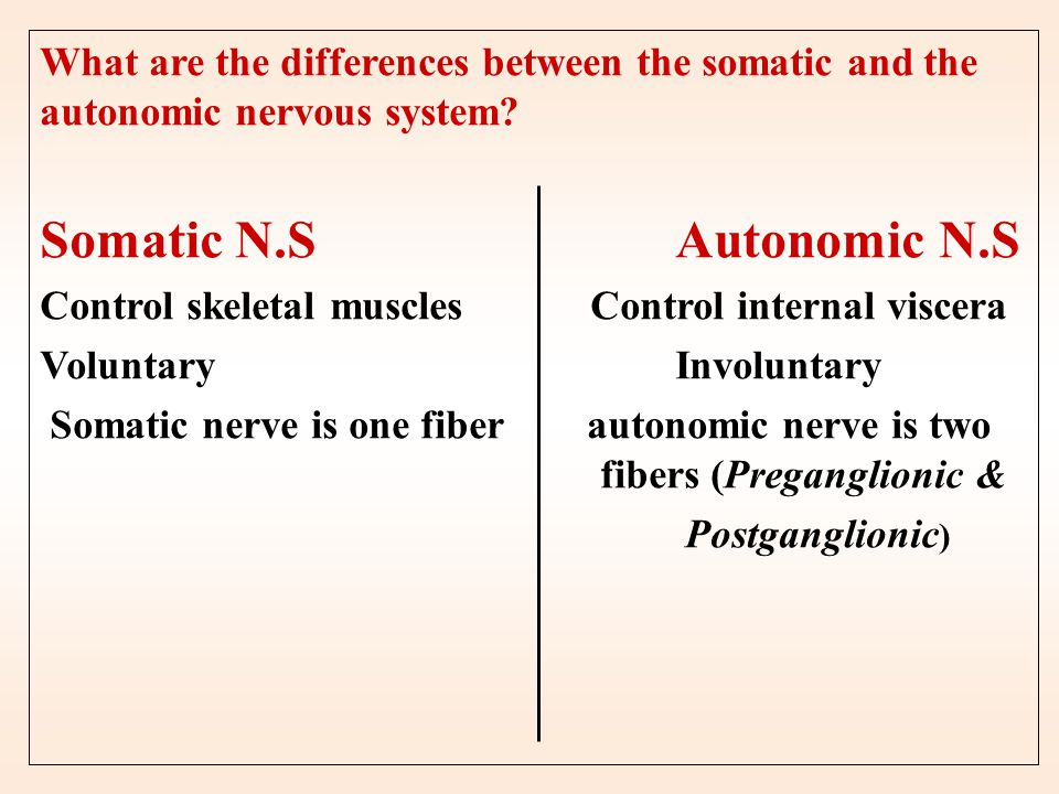 Somatic N.S Autonomic N.S