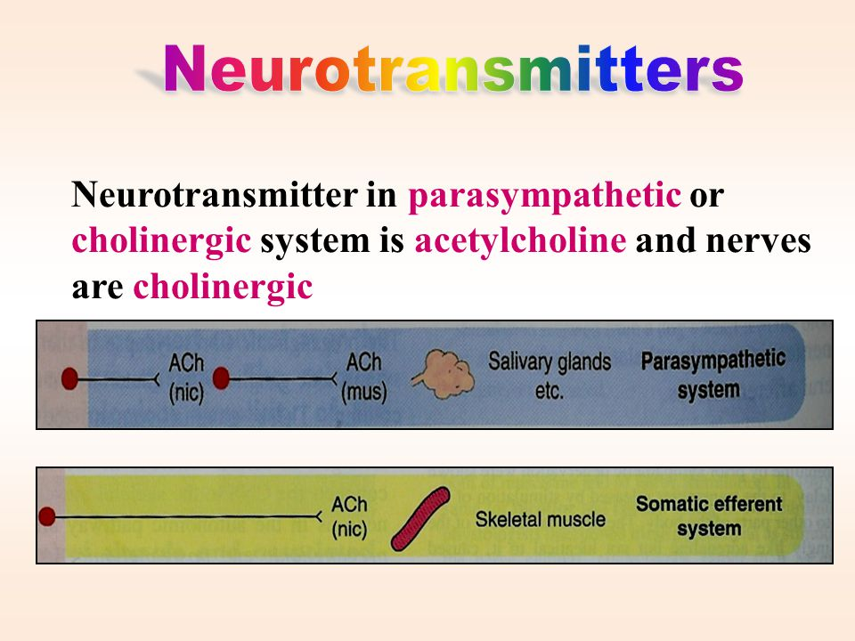 Neurotransmitters Neurotransmitter in parasympathetic or cholinergic system is acetylcholine and nerves are cholinergic.