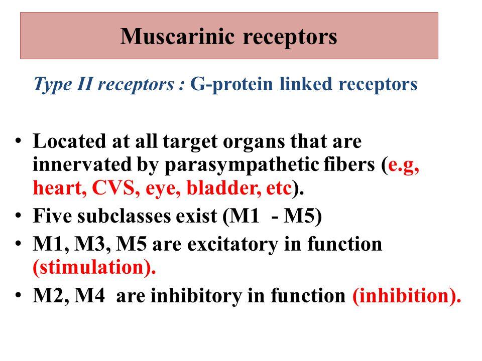 Muscarinic receptors Type II receptors : G-protein linked receptors.