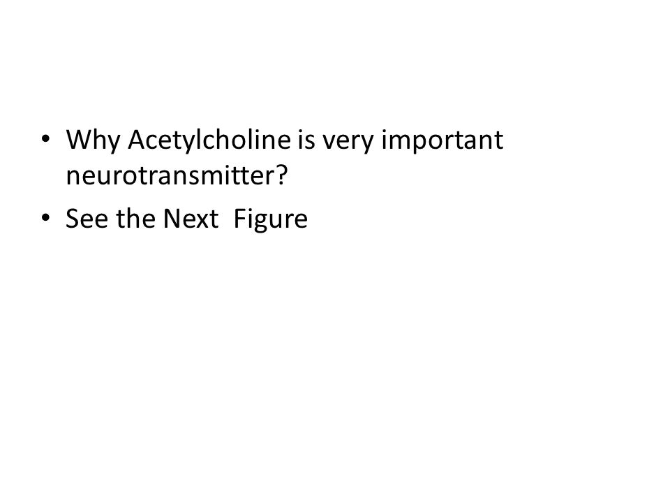 Why Acetylcholine is very important neurotransmitter