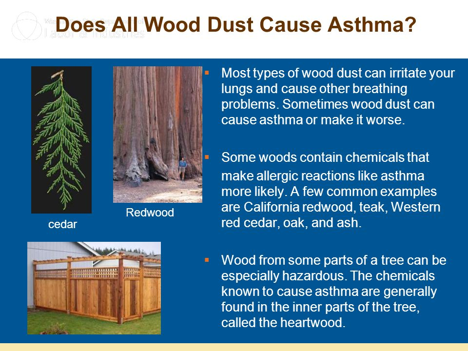 Does All Wood Dust Cause Asthma