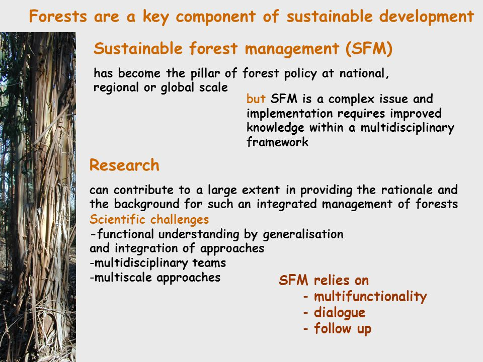 Forests are a key component of sustainable development